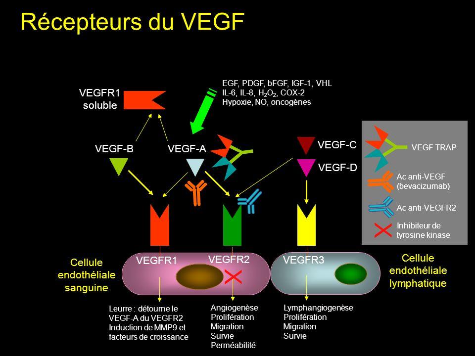 Récepteurs du VEGF VEGFR1 VEGFR2 VEGFR3 VEGF-BVEGF-A VEGF-C VEGF-D VEGFR1 soluble Cellule endothéliale sanguine Leurre : détourne le VEGF-A du VEGFR2