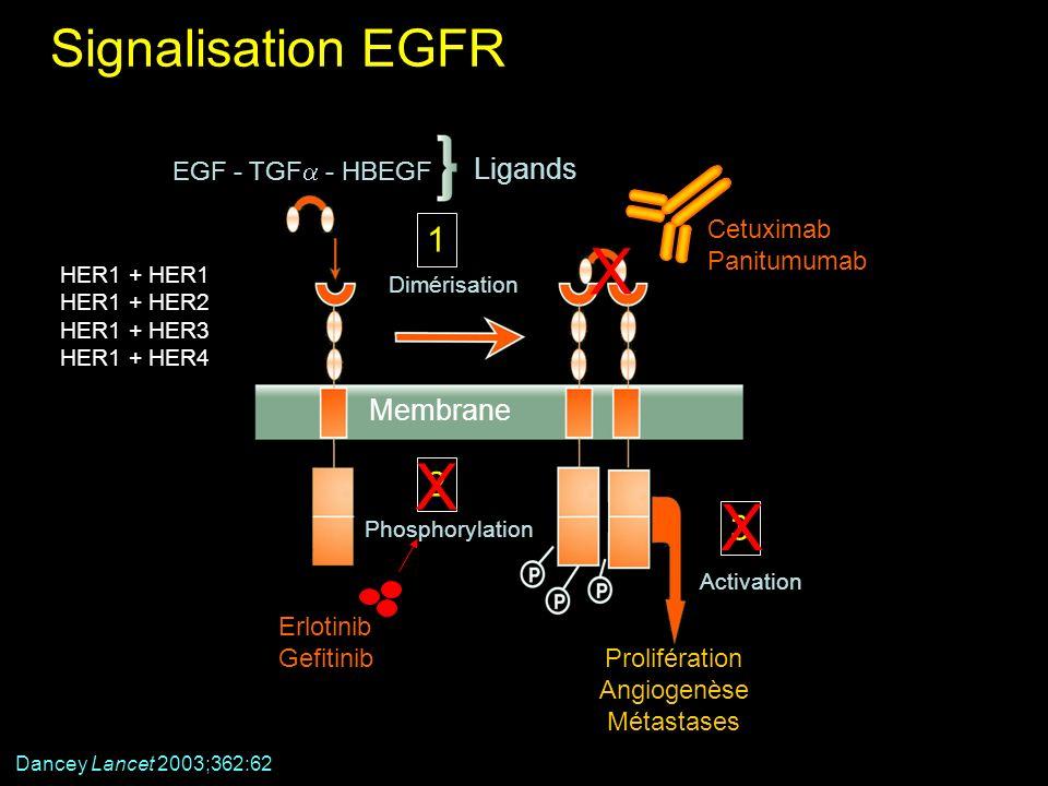 Signalisation EGFR Membrane Prolifération Angiogenèse Métastases Activation 3 Phosphorylation 2 EGF - TGF - HBEGF Ligands Dimérisation 1 Erlotinib Gef