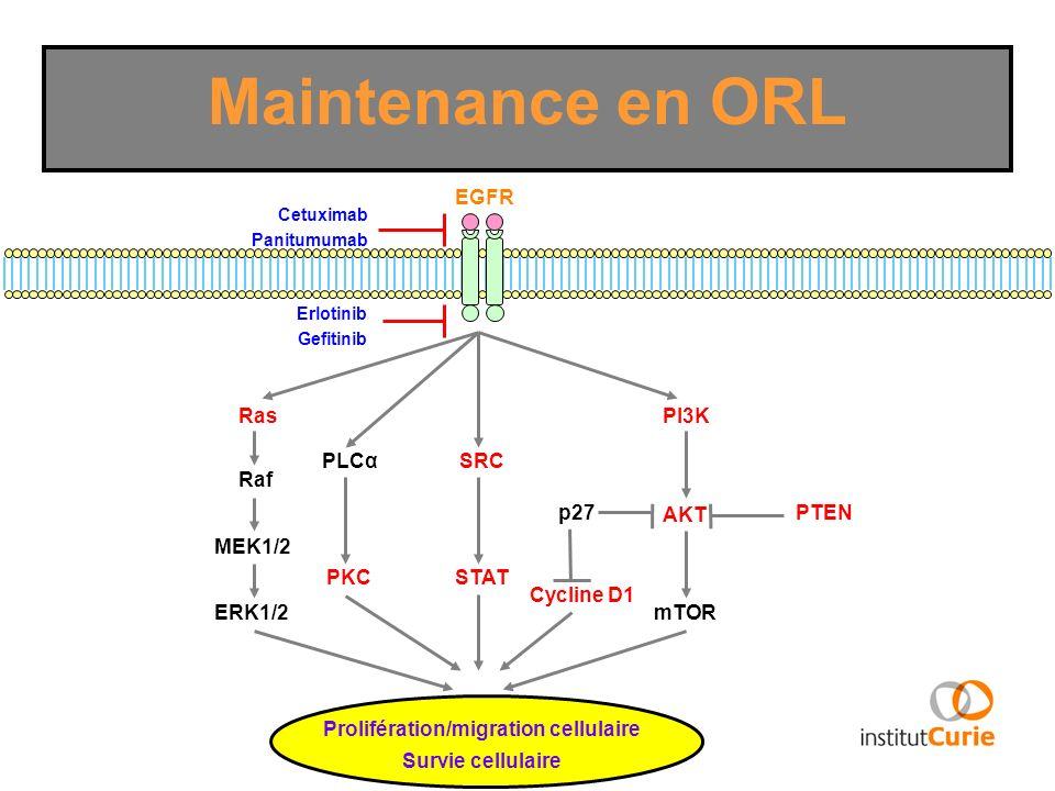Ras Raf MEK1/2 ERK1/2 PKC PI3K AKT mTOR PLCα STAT SRC EGFR PTEN Prolifération/migration cellulaire Survie cellulaire p27 Cycline D1 Erlotinib Gefitini