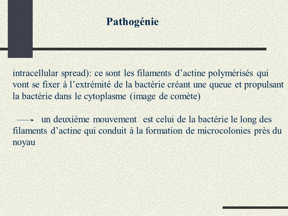 Pathogénie intracellular spread): ce sont les filaments dactine polymérisés qui vont se fixer à lextrémité de la bactérie créant une queue et propulsant la bactérie dans le cytoplasme (image de comète) un deuxième mouvement est celui de la bactérie le long des filaments dactine qui conduit à la formation de microcolonies près du noyau