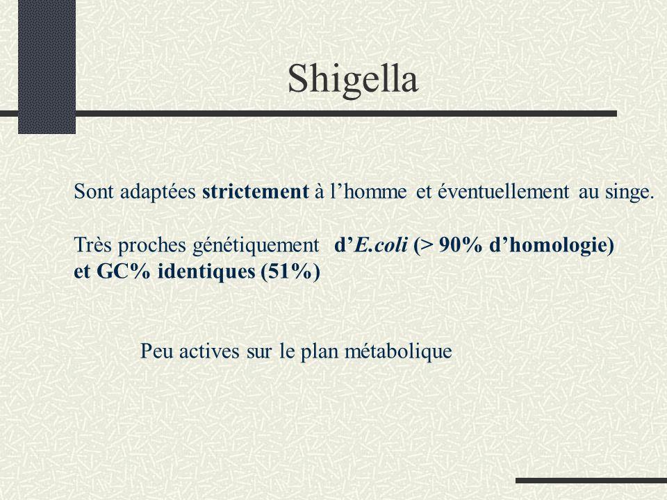 Taxonomie 4 espèces sont individualisées sur les plans biochimique et antigénique Shigella dysenteriae (sous groupe A ) 10 sérovars sérovar 1: bacille de Shiga Shigella flexneri (sous groupe B ) 6 sérovars Shigella boydii (sous groupe C ) 15 sérovars Shigella sonnei (sous groupe D ) 1 sérovar