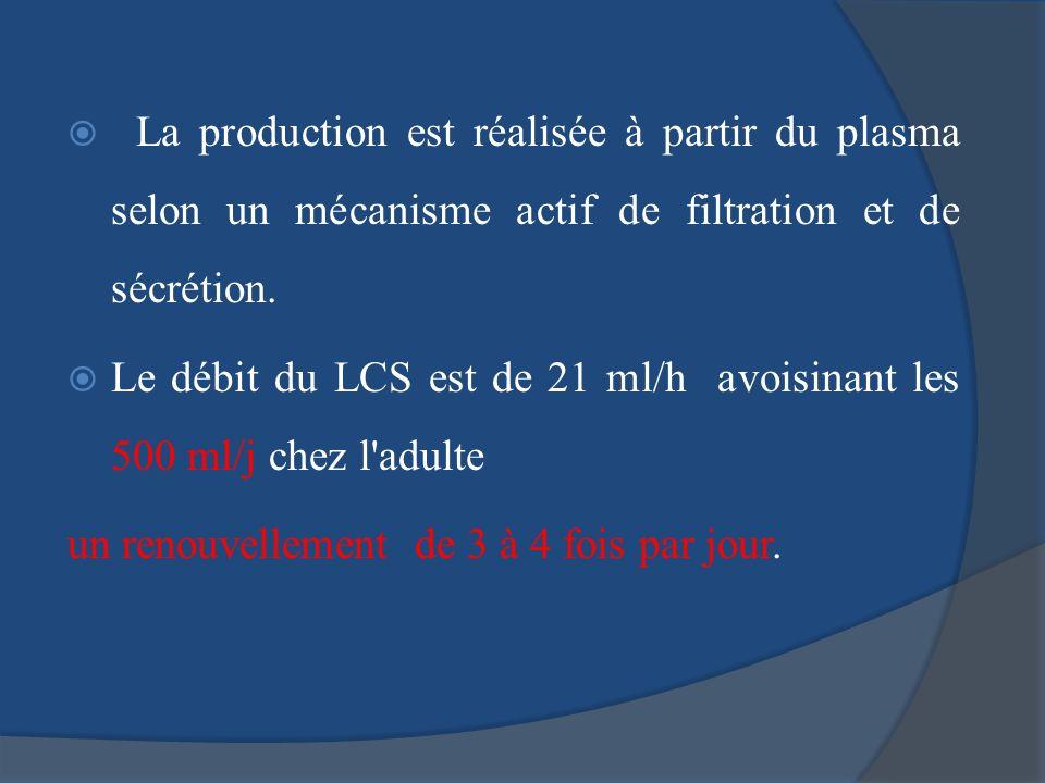 La production est réalisée à partir du plasma selon un mécanisme actif de filtration et de sécrétion. Le débit du LCS est de 21 ml/h avoisinant les 50