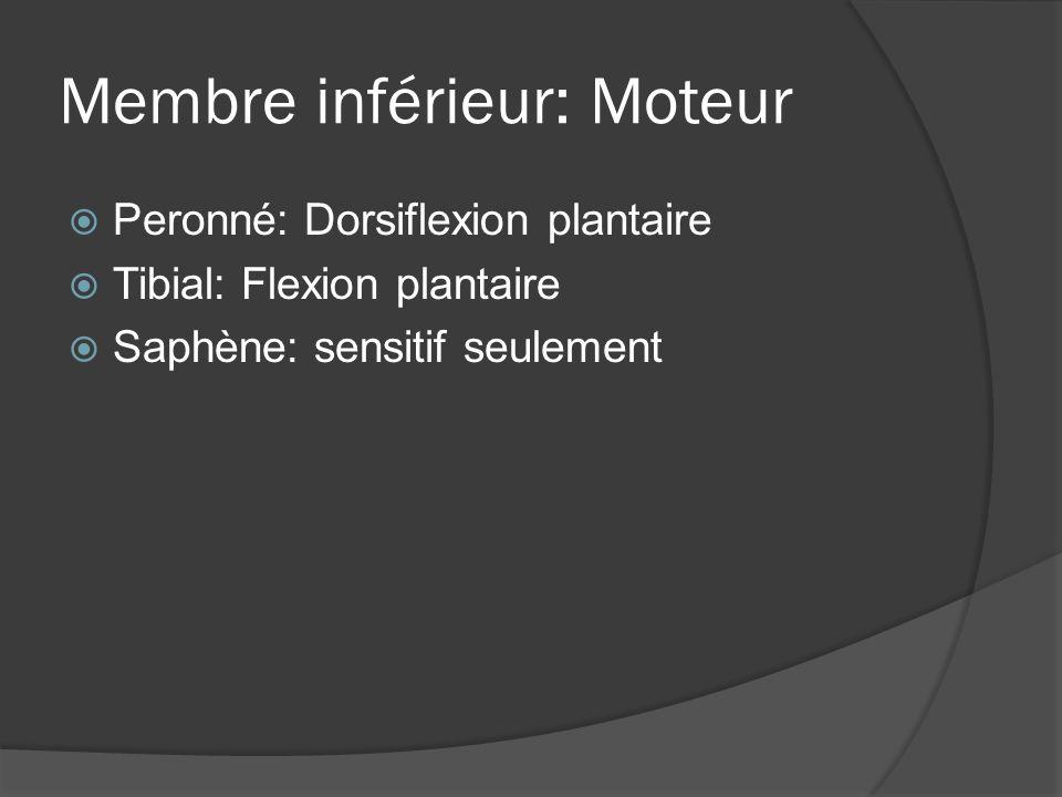 Membre inférieur: Moteur Peronné: Dorsiflexion plantaire Tibial: Flexion plantaire Saphène: sensitif seulement
