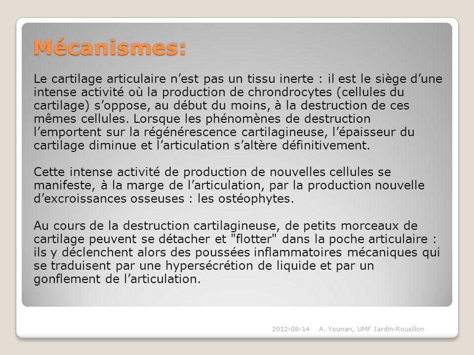 Mécanismes: Le cartilage articulaire nest pas un tissu inerte : il est le siège dune intense activité où la production de chrondrocytes (cellules du c