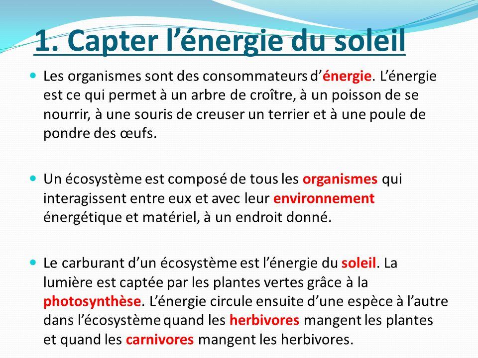 1.Capter lénergie du soleil Les organismes sont des consommateurs dénergie.