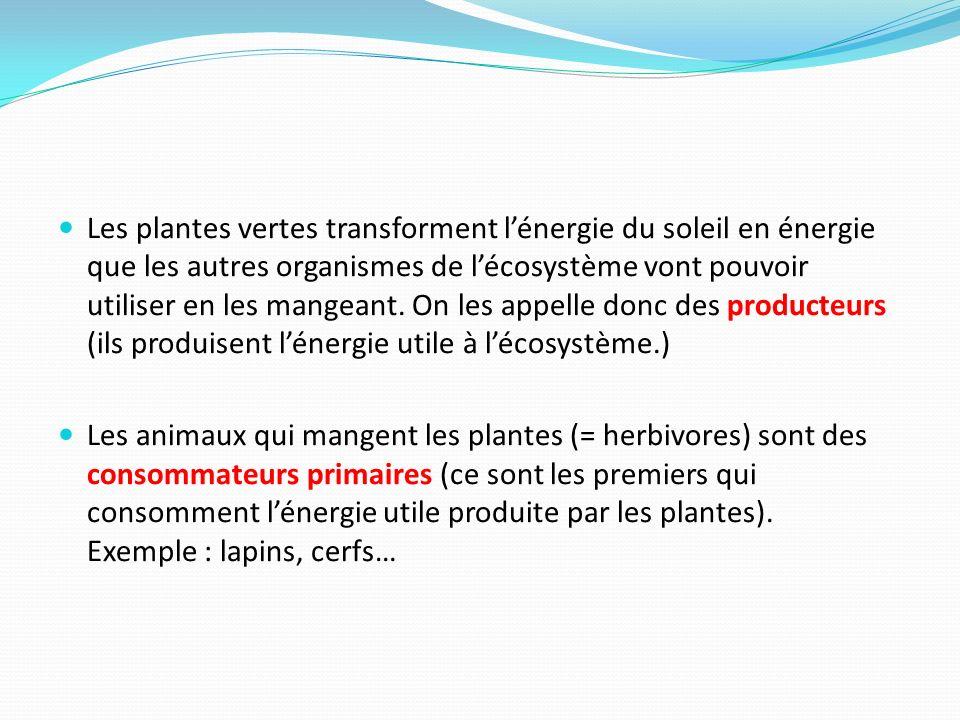 Les plantes vertes transforment lénergie du soleil en énergie que les autres organismes de lécosystème vont pouvoir utiliser en les mangeant. On les a