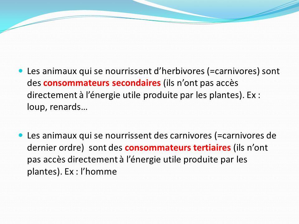 Les animaux qui se nourrissent dherbivores (=carnivores) sont des consommateurs secondaires (ils nont pas accès directement à lénergie utile produite
