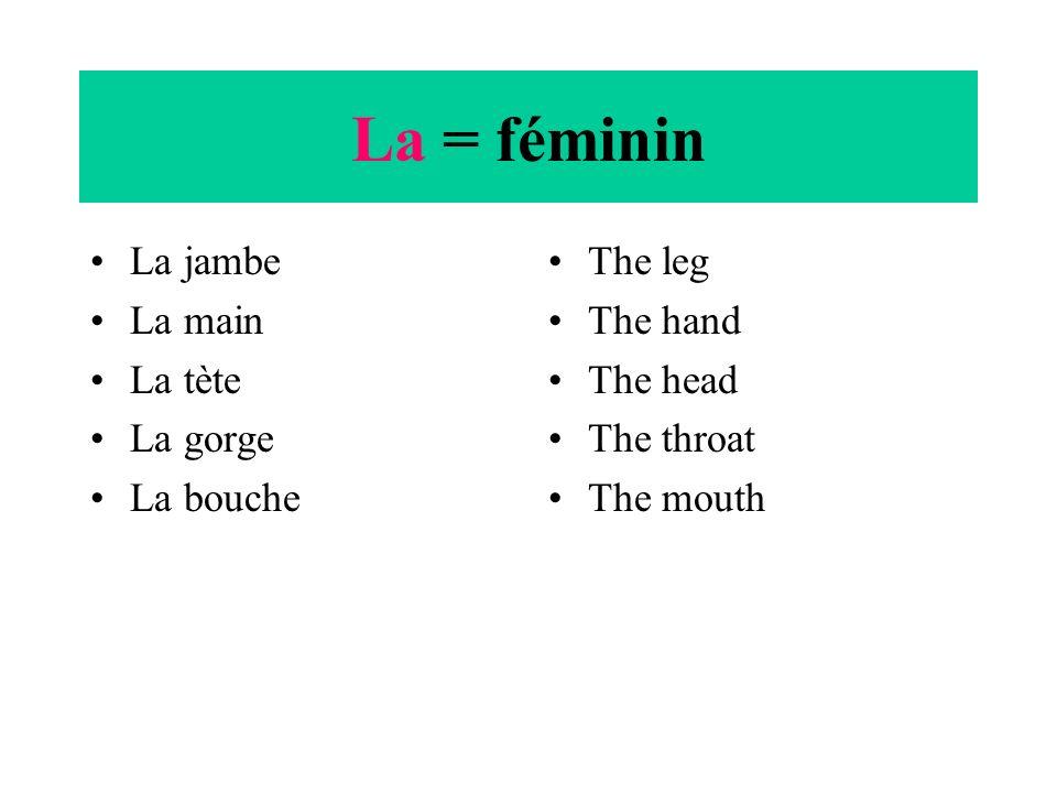 Le =masculin Le cou Le ventre Le genou Le pied Le dos Le bras Le doigt Le pouce Le nez The neck The stomach The knee The foot The back The arm The fin