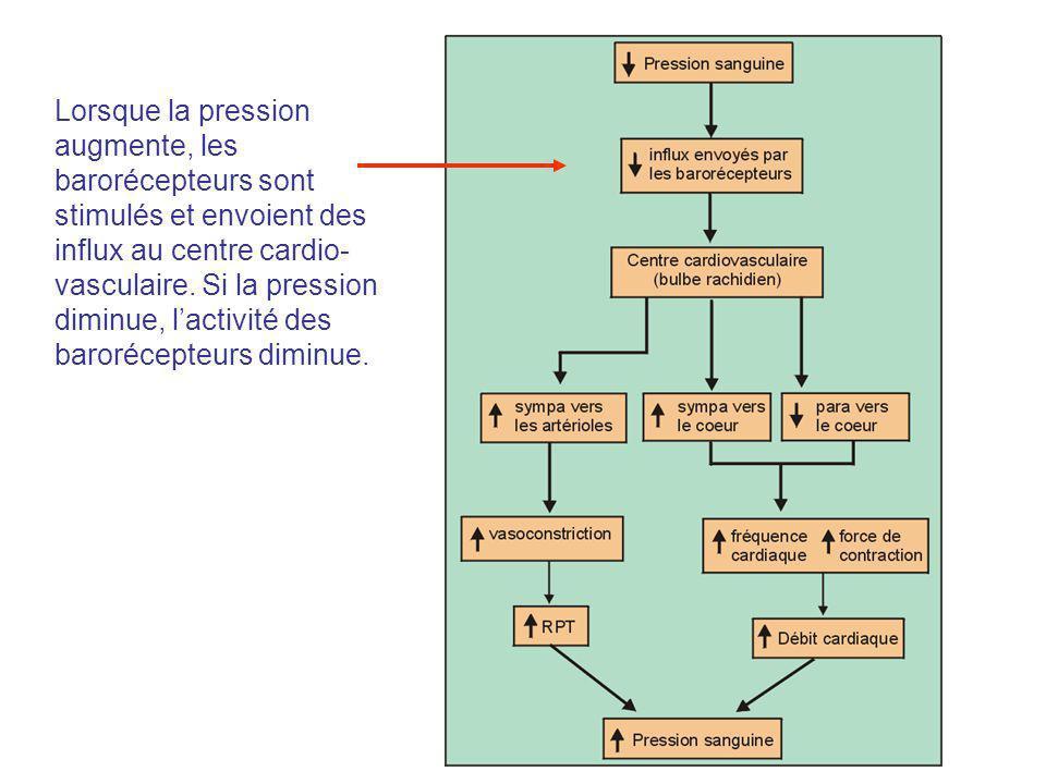 Lorsque la pression augmente, les barorécepteurs sont stimulés et envoient des influx au centre cardio- vasculaire. Si la pression diminue, lactivité