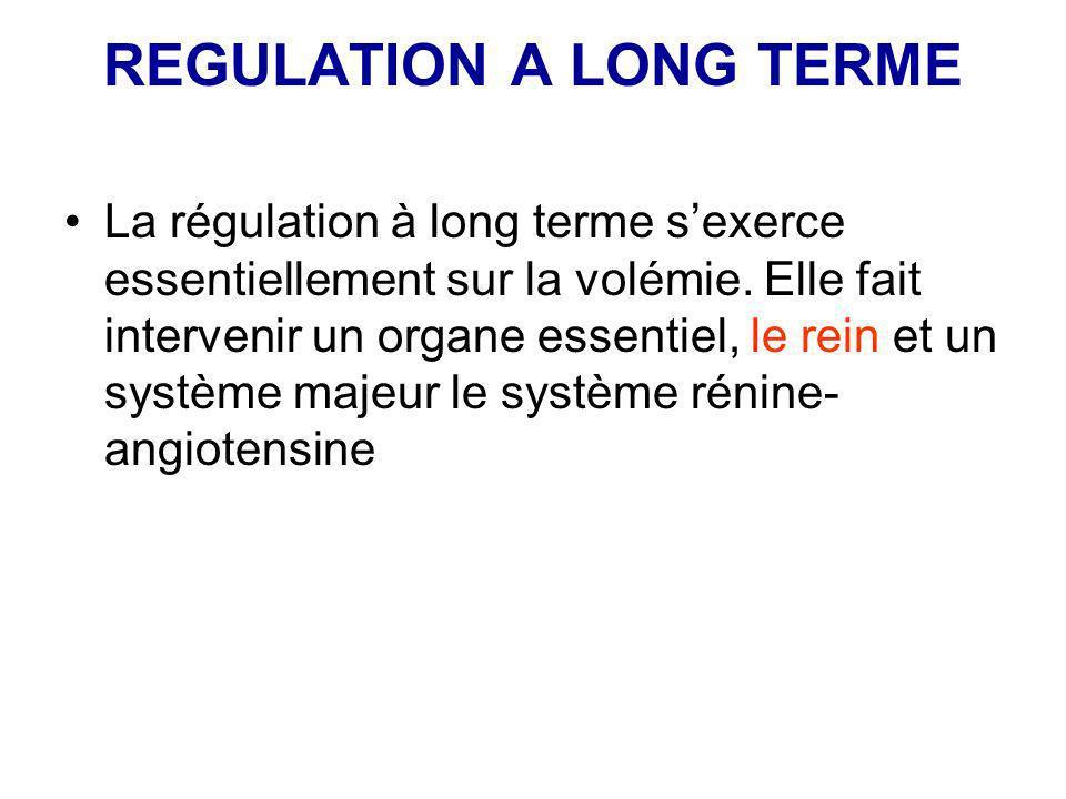 REGULATION A LONG TERME La régulation à long terme sexerce essentiellement sur la volémie. Elle fait intervenir un organe essentiel, le rein et un sys