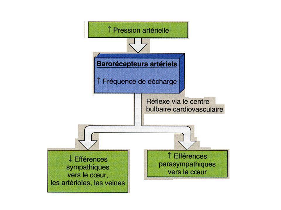 Natriurèse de pression Lorsque la volémie augmente, la PA augmente aussi.
