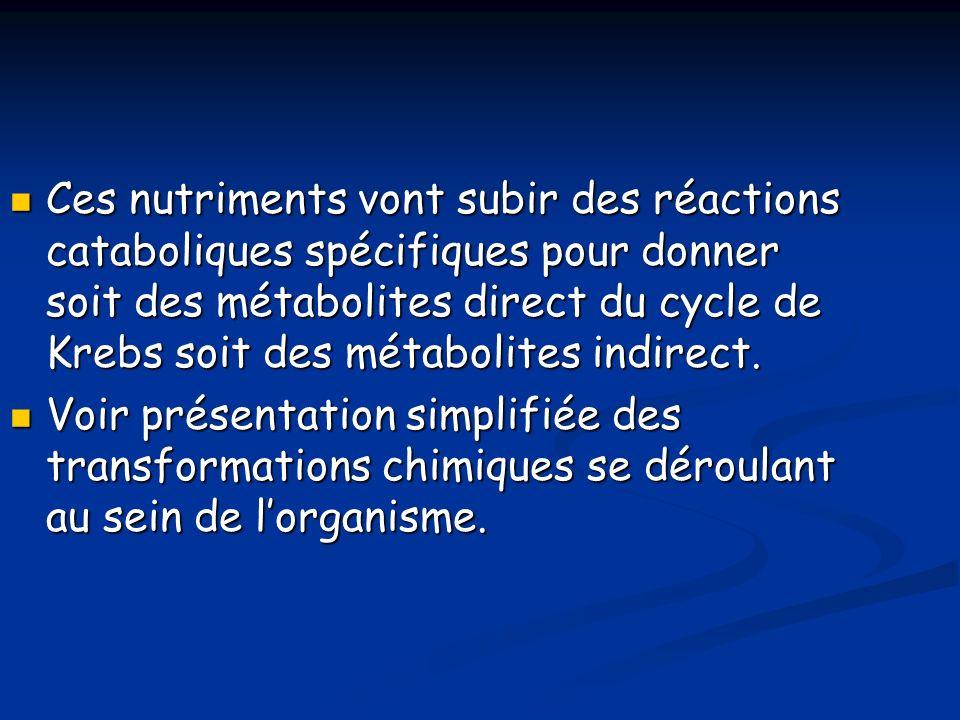 Ces nutriments vont subir des réactions cataboliques spécifiques pour donner soit des métabolites direct du cycle de Krebs soit des métabolites indirect.