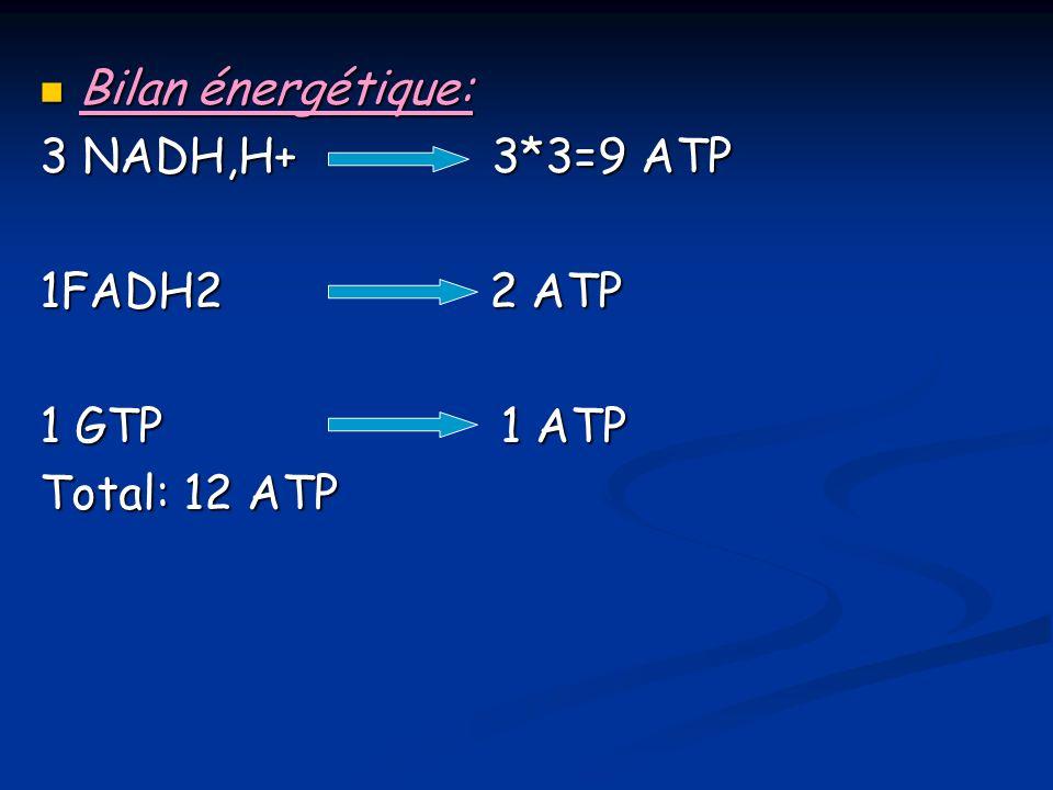 Bilan énergétique: Bilan énergétique: 3 NADH,H+ 3*3=9 ATP 1FADH2 2 ATP 1 GTP 1 ATP Total: 12 ATP