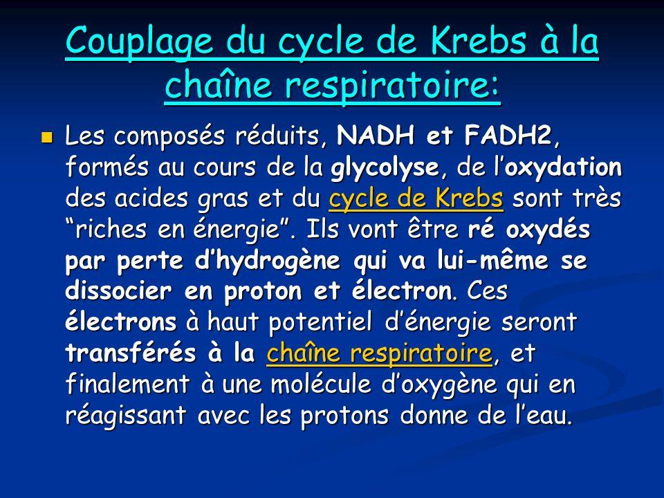 Couplage du cycle de Krebs à la chaîne respiratoire: Les composés réduits, NADH et FADH2, formés au cours de la glycolyse, de loxydation des acides gras et du cycle de Krebs sont très riches en énergie.