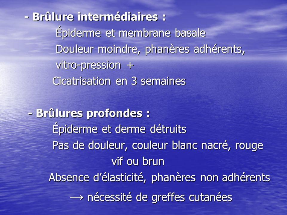 - Brûlure intermédiaires : - Brûlure intermédiaires : Épiderme et membrane basale Épiderme et membrane basale Douleur moindre, phanères adhérents, Dou