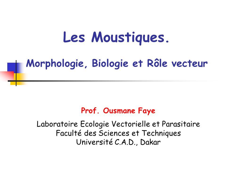 Moustiques Position systématique Morphologie Biologie Rôle vecteur Compétence – Capacité vectorielle