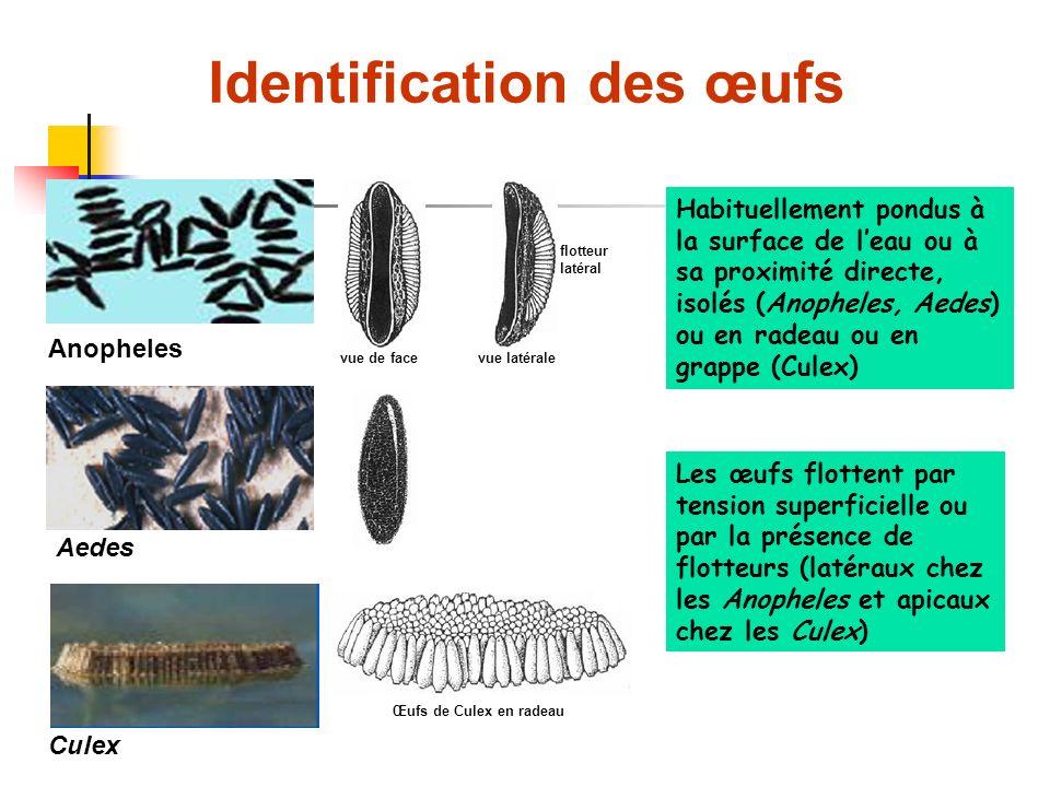 Identification des œufs Anopheles Aedes Culex Habituellement pondus à la surface de leau ou à sa proximité directe, isolés (Anopheles, Aedes) ou en radeau ou en grappe (Culex) Les œufs flottent par tension superficielle ou par la présence de flotteurs (latéraux chez les Anopheles et apicaux chez les Culex) vue de facevue latérale flotteur latéral Œufs de Culex en radeau