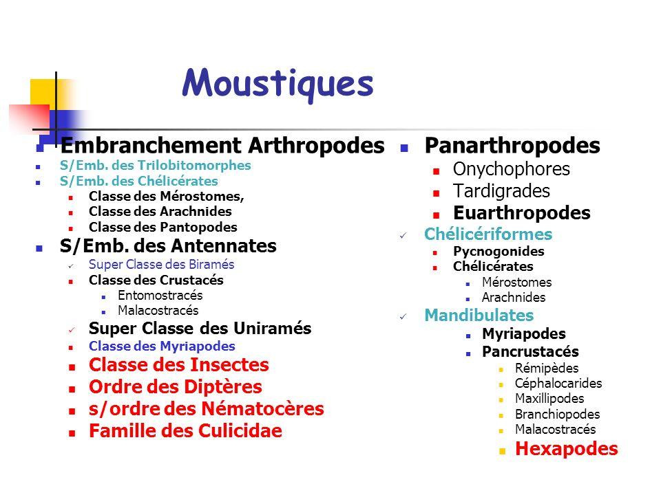 Moustiques Embranchement Arthropodes S/Emb.des Trilobitomorphes S/Emb.