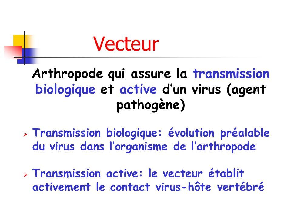 Vecteur Arthropode qui assure la transmission biologique et active dun virus (agent pathogène) Transmission biologique: évolution préalable du virus dans lorganisme de larthropode Transmission active: le vecteur établit activement le contact virus-hôte vertébré
