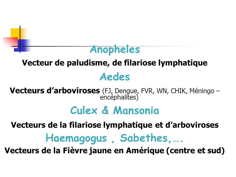 Moustiques Anopheles Vecteur de paludisme, de filariose lymphatique Aedes Vecteurs darboviroses (FJ, Dengue, FVR, WN, CHIK, Méningo – encéphalites) Culex & Mansonia Vecteurs de la filariose lymphatique et darboviroses Haemagogus, Sabethes,….