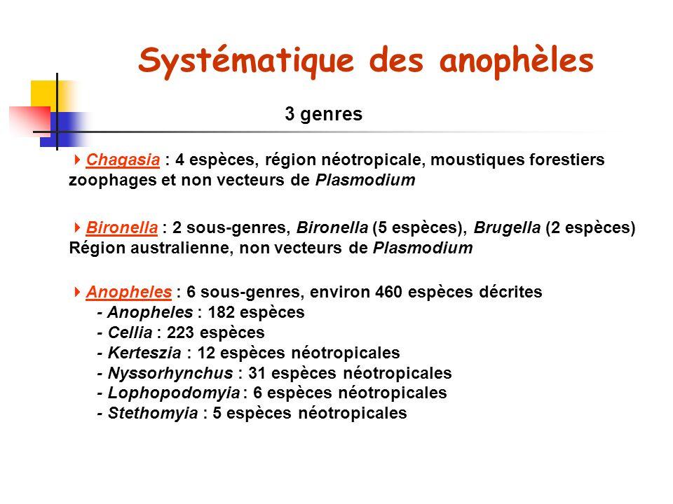 Systématique des anophèles 3 genres Chagasia : 4 espèces, région néotropicale, moustiques forestiers zoophages et non vecteurs de Plasmodium Bironella : 2 sous-genres, Bironella (5 espèces), Brugella (2 espèces) Région australienne, non vecteurs de Plasmodium Anopheles : 6 sous-genres, environ 460 espèces décrites - Anopheles : 182 espèces - Cellia : 223 espèces - Kerteszia : 12 espèces néotropicales - Nyssorhynchus : 31 espèces néotropicales - Lophopodomyia : 6 espèces néotropicales - Stethomyia : 5 espèces néotropicales