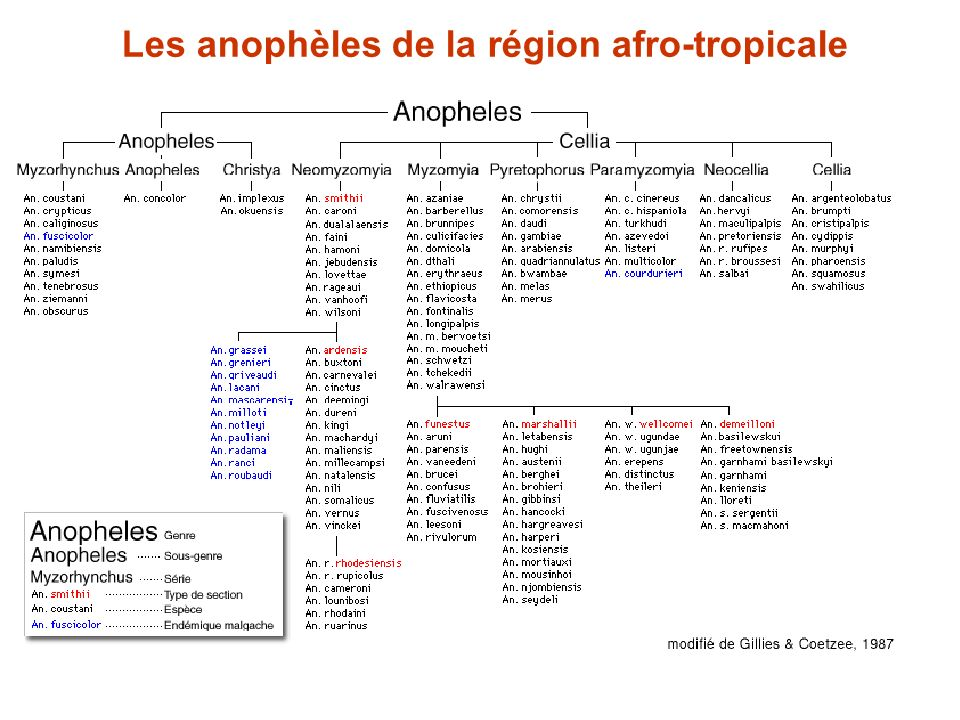 Les anophèles de la région afro-tropicale