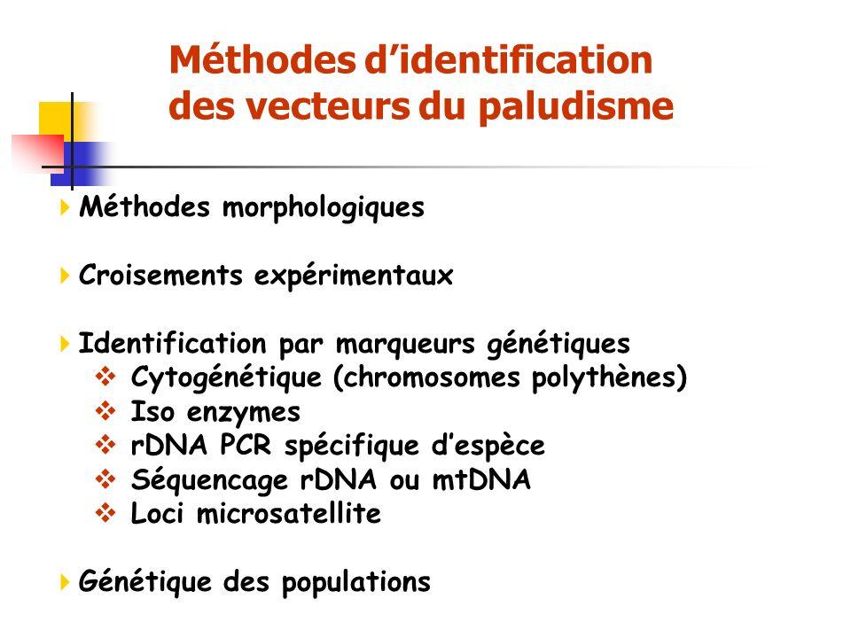 Méthodes didentification des vecteurs du paludisme Méthodes morphologiques Croisements expérimentaux Identification par marqueurs génétiques Cytogénétique (chromosomes polythènes) Iso enzymes rDNA PCR spécifique despèce Séquencage rDNA ou mtDNA Loci microsatellite Génétique des populations