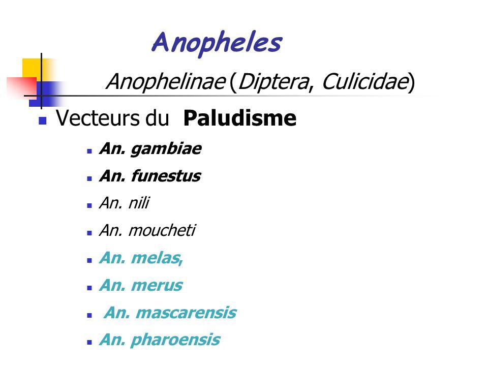 Anopheles Anophelinae (Diptera, Culicidae) Vecteurs du Paludisme An.