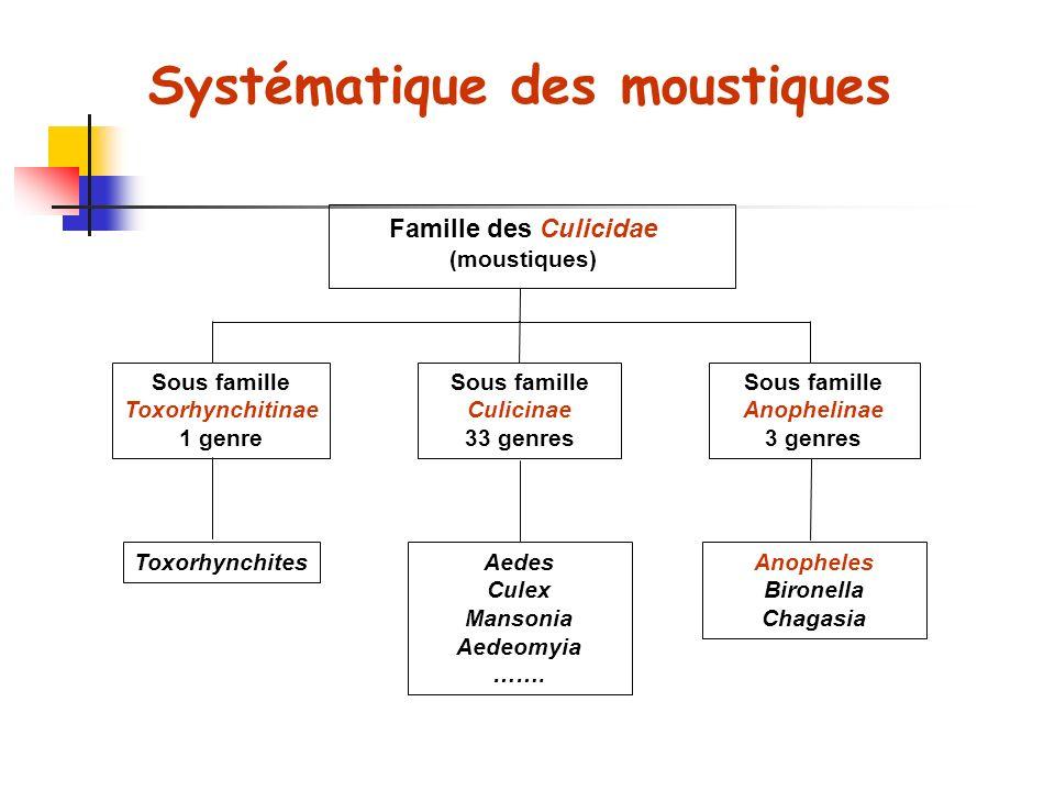 Famille des Culicidae (moustiques) Sous famille Toxorhynchitinae 1 genre Sous famille Culicinae 33 genres Sous famille Anophelinae 3 genres ToxorhynchitesAedes Culex Mansonia Aedeomyia …….