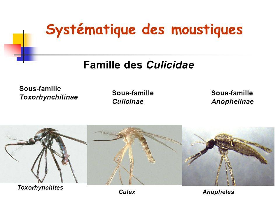 Culicinae Anophelinae Différences morphologiques