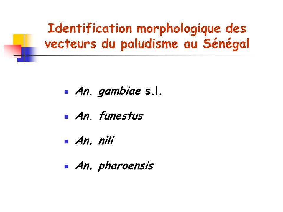Identification morphologique des vecteurs du paludisme au Sénégal An.