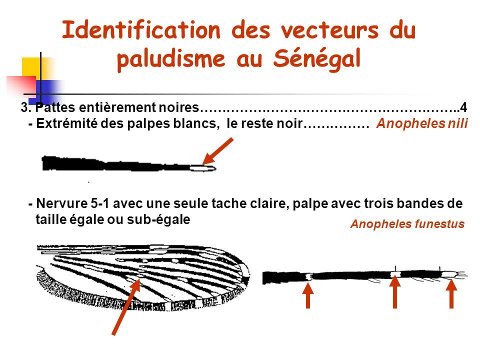 Identification des vecteurs du paludisme au Sénégal 3.