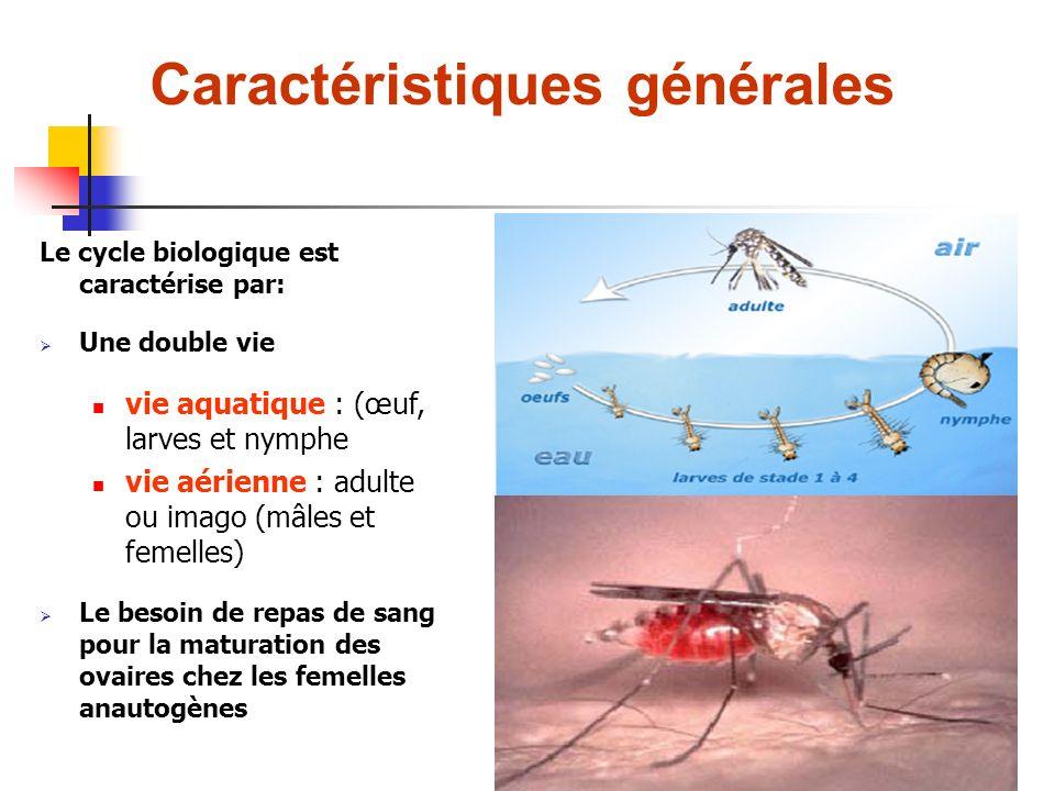 Le cycle biologique est caractérise par: Une double vie vie aquatique : (œuf, larves et nymphe vie aérienne : adulte ou imago (mâles et femelles) Le besoin de repas de sang pour la maturation des ovaires chez les femelles anautogènes Caractéristiques générales
