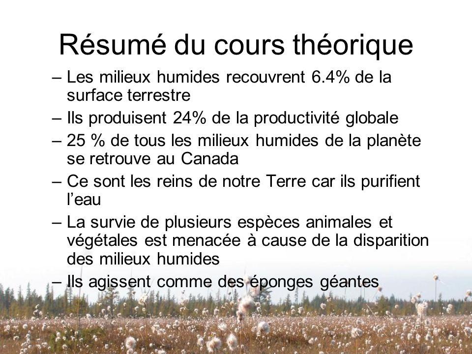 Résumé du cours théorique –Les milieux humides recouvrent 6.4% de la surface terrestre –Ils produisent 24% de la productivité globale –25 % de tous le
