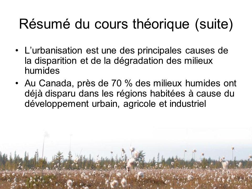 Résumé du cours théorique (suite) Lurbanisation est une des principales causes de la disparition et de la dégradation des milieux humides Au Canada, p