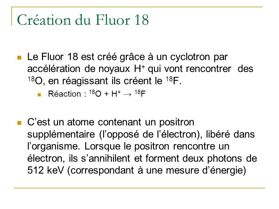 Création du Fluor 18 Le Fluor 18 est créé grâce à un cyclotron par accélération de noyaux H + qui vont rencontrer des 18 O, en réagissant ils créent l