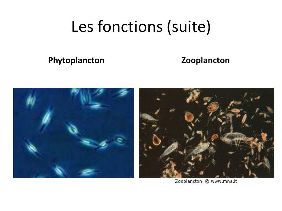 Les fonctions (suite) PhytoplanctonZooplancton