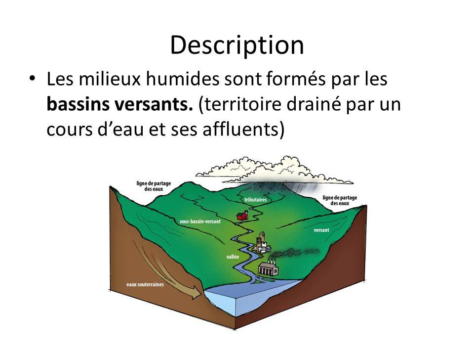 Description Les milieux humides sont formés par les bassins versants. (territoire drainé par un cours deau et ses affluents)