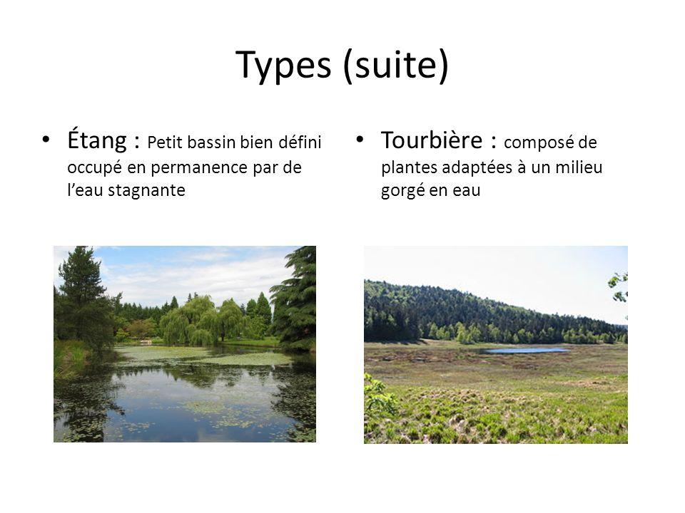 Types (suite) Étang : Petit bassin bien défini occupé en permanence par de leau stagnante Tourbière : composé de plantes adaptées à un milieu gorgé en