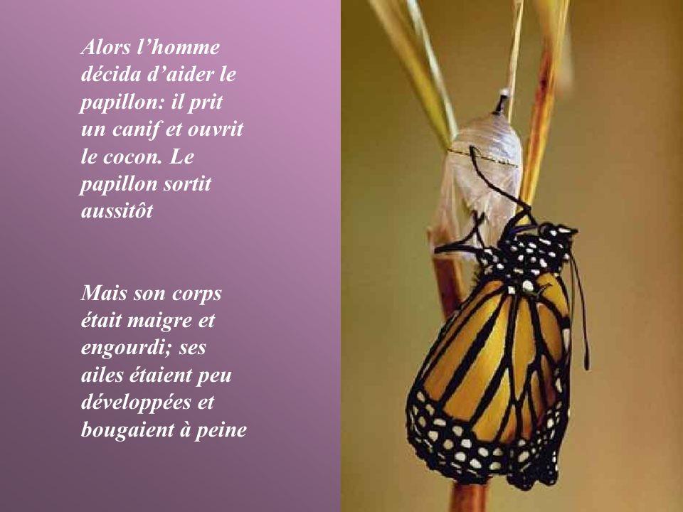 Alors lhomme décida daider le papillon: il prit un canif et ouvrit le cocon.