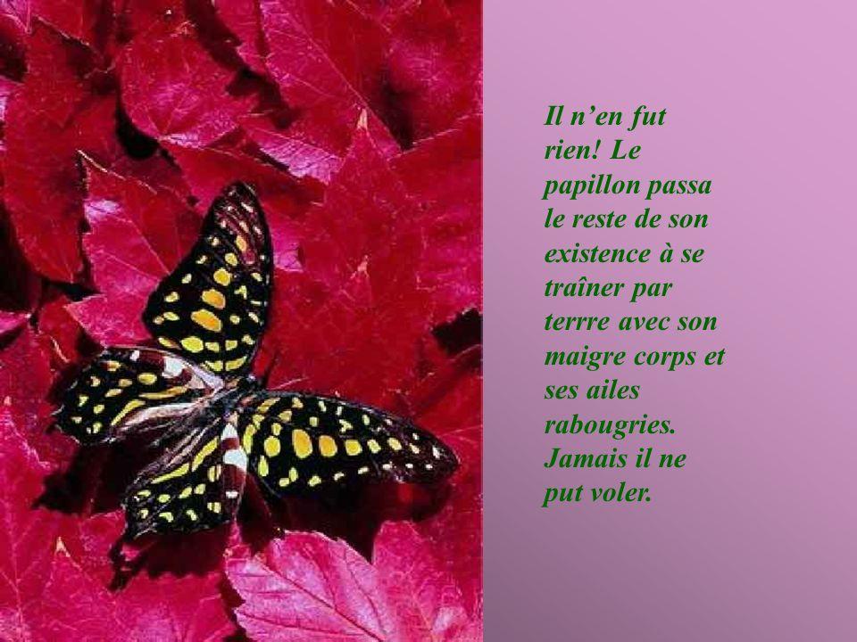Lhomme continua à observer, pensant que, dun moment à lautre, les ailes du papillon souvriraient et seraient capables de supporter le corps du papillon pour quil prenne son envol