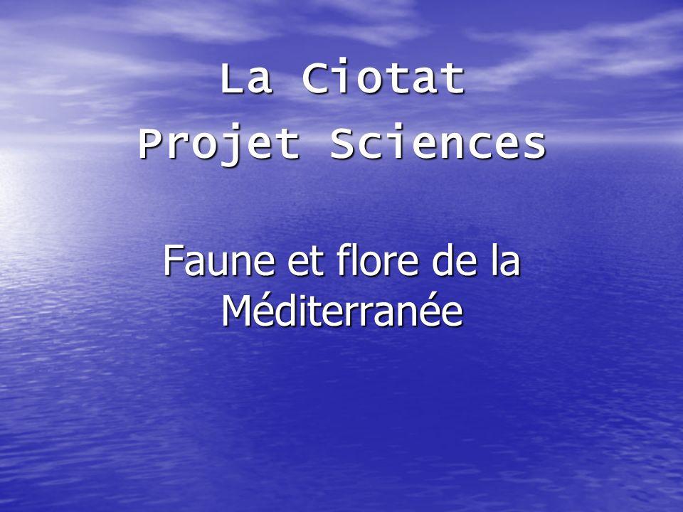 Faune et flore de la Méditerranée La Ciotat Projet Sciences