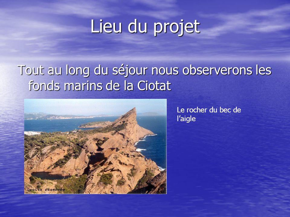 Lieu du projet Tout au long du séjour nous observerons les fonds marins de la Ciotat Le rocher du bec de laigle
