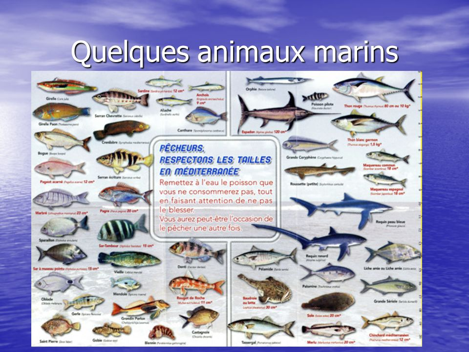 Quelques animaux marins