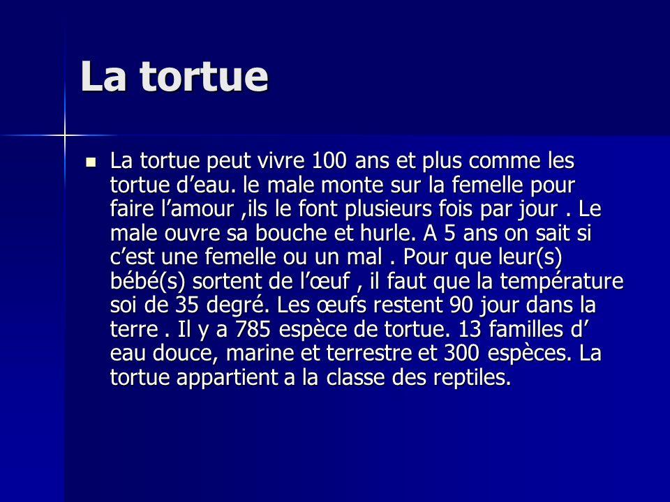La tortue La tortue peut vivre 100 ans et plus comme les tortue deau.
