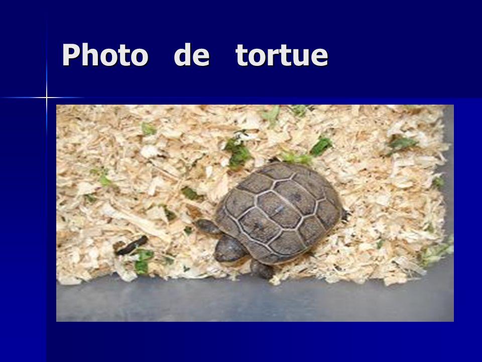 Photo de tortue