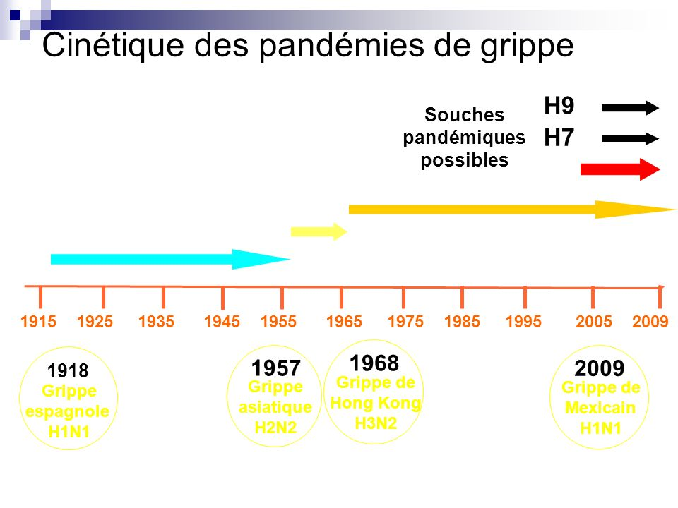 1918 Grippe espagnole H1N1 1957 Grippe asiatique H2N2 1968 Grippe de Hong Kong H3N2 1915 1925 1935 1945 1955 1965 1975 1985 1995 2005 2009 H7 Souches