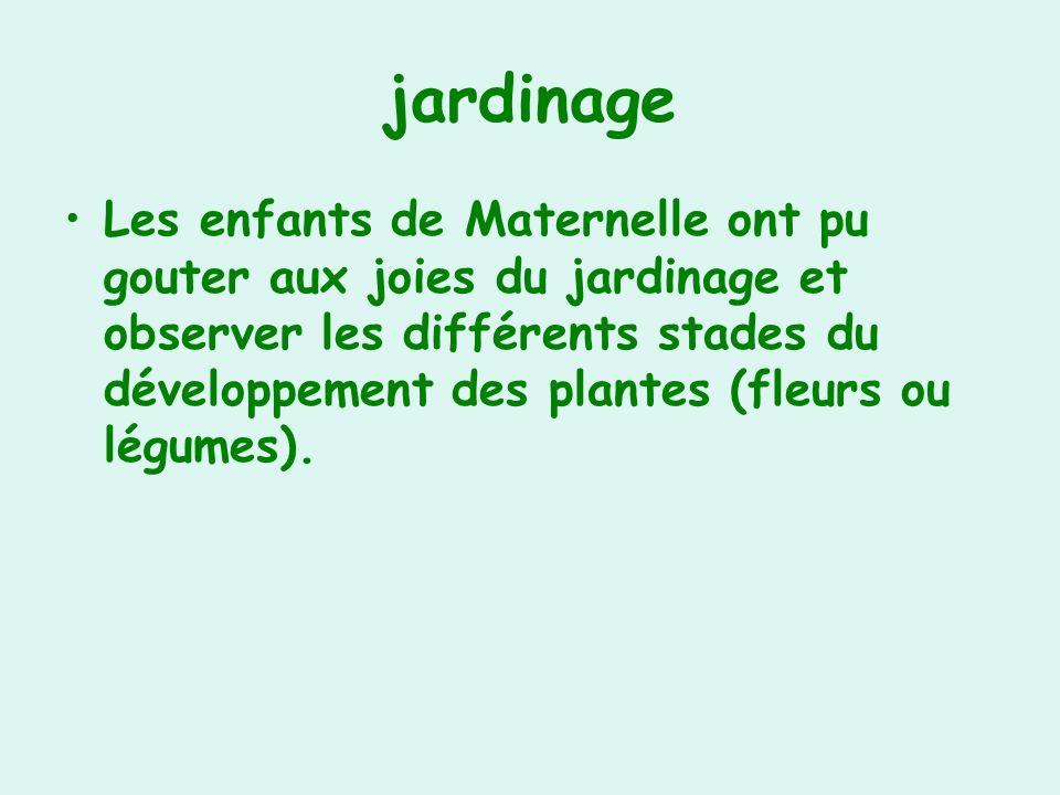 jardinage Les enfants de Maternelle ont pu gouter aux joies du jardinage et observer les différents stades du développement des plantes (fleurs ou légumes).