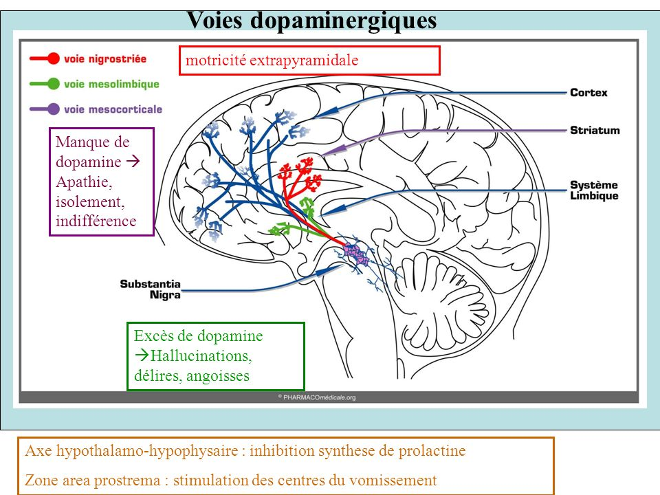 10 les neuroleptiques bloquent les récepteurs dopaminergiques synapse dopaminergique dopamine Récepteur post- synaptique dopamine neuroleptiques Influx nerveux