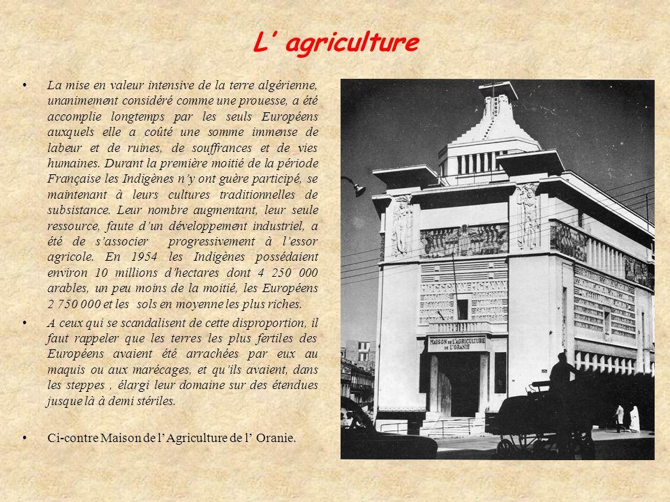 L agriculture La mise en valeur intensive de la terre algérienne, unanimement considéré comme une prouesse, a été accomplie longtemps par les seuls Européens auxquels elle a coûté une somme immense de labeur et de ruines, de souffrances et de vies humaines.